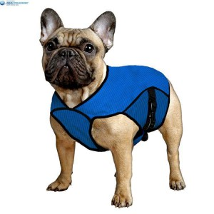 aqua-coolkeeper-cooling-jacket-pet-dog-french-bulldog.jpg
